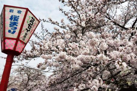 一度は訪れたい!さくらの名所100選の岩倉市桜まつりとのんぼり洗いの風物詩