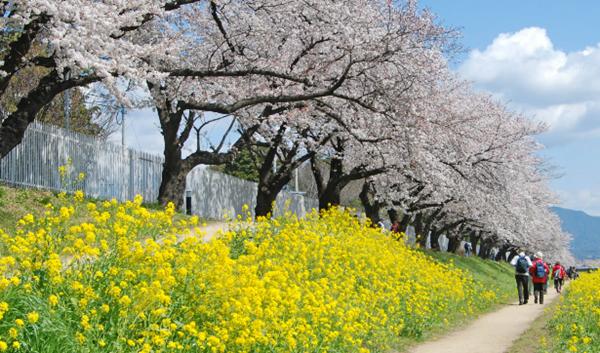 桜の美しさは、春の美しさ。愛知・岐阜のお花見スポット7選