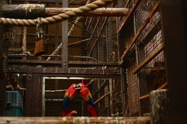 「みんなで築きあげる動植物園でありたい」今だから知ってほしい、東山動物園の園長のキモチ。 - 2cc5c07a1dd62d4e2a78ff792c33db44