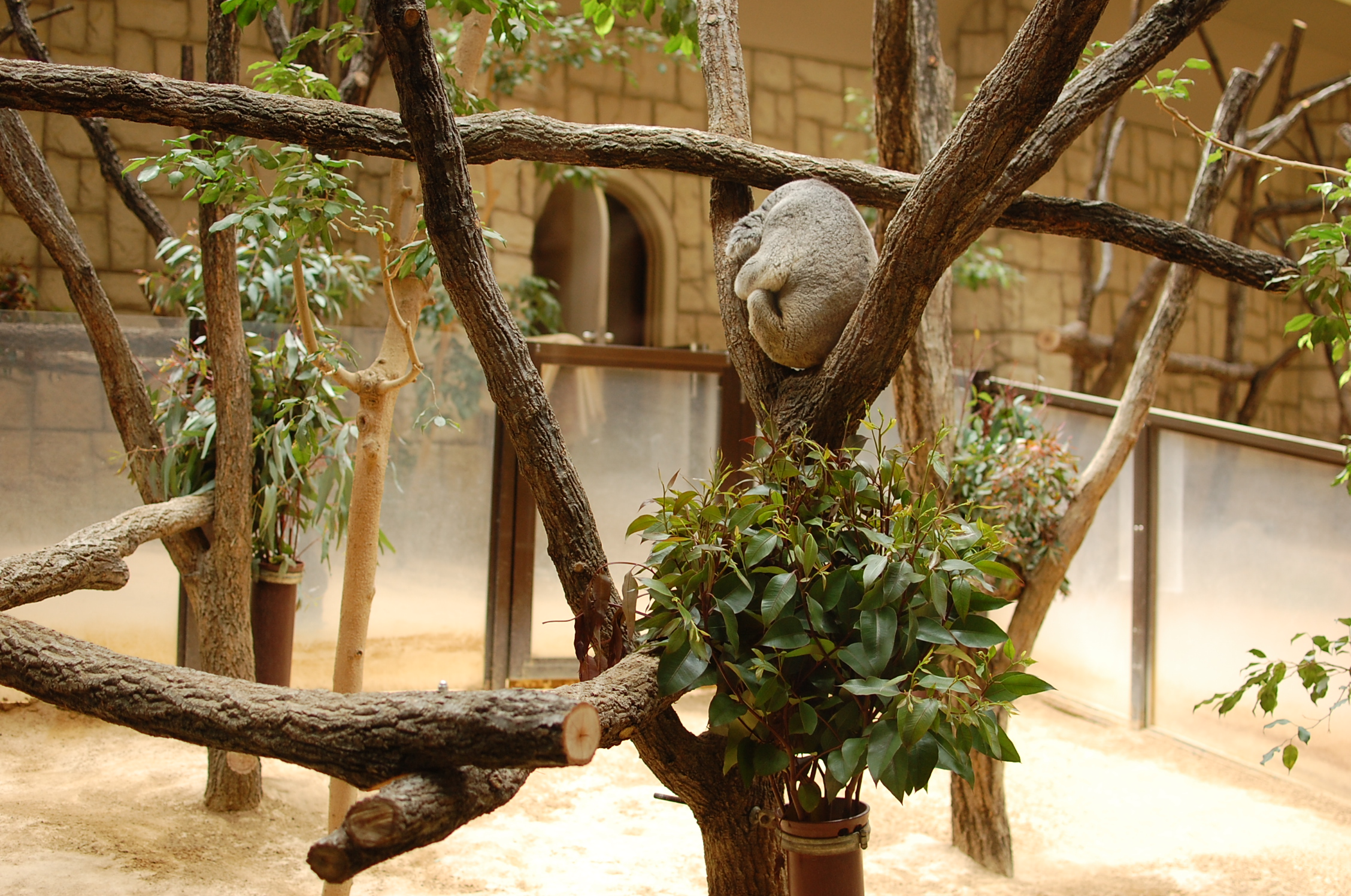東山動物園の園長に聞いた!動物園をより楽しむためのプランとは - 540bdfa9887949e01fba69e9a9152199