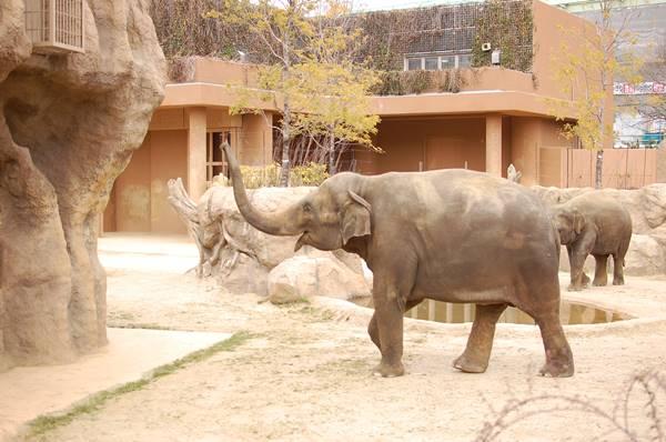 「みんなで築きあげる動植物園でありたい」今だから知ってほしい、東山動物園の園長のキモチ。 - 924f1fe6dadb9335bfc8189d2ed1ca4b