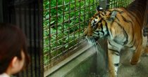思い出をつなぐ。東山動植物園・80周年記念イベントの見どころを徹底解剖! - DSC 0246 210x110