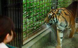 思い出をつなぐ。東山動植物園・80周年記念イベントの見どころを徹底解剖! - DSC 0246 260x160