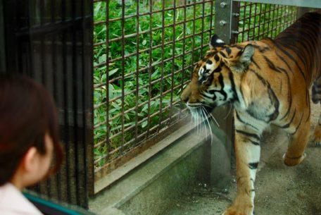 思い出をつなぐ。東山動植物園・80周年記念イベントの見どころを徹底解剖!