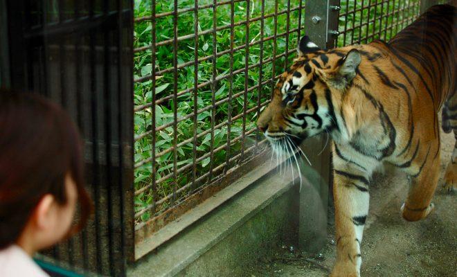 思い出をつなぐ。東山動植物園・80周年記念イベントの見どころを徹底解剖! - DSC 0246 660x400