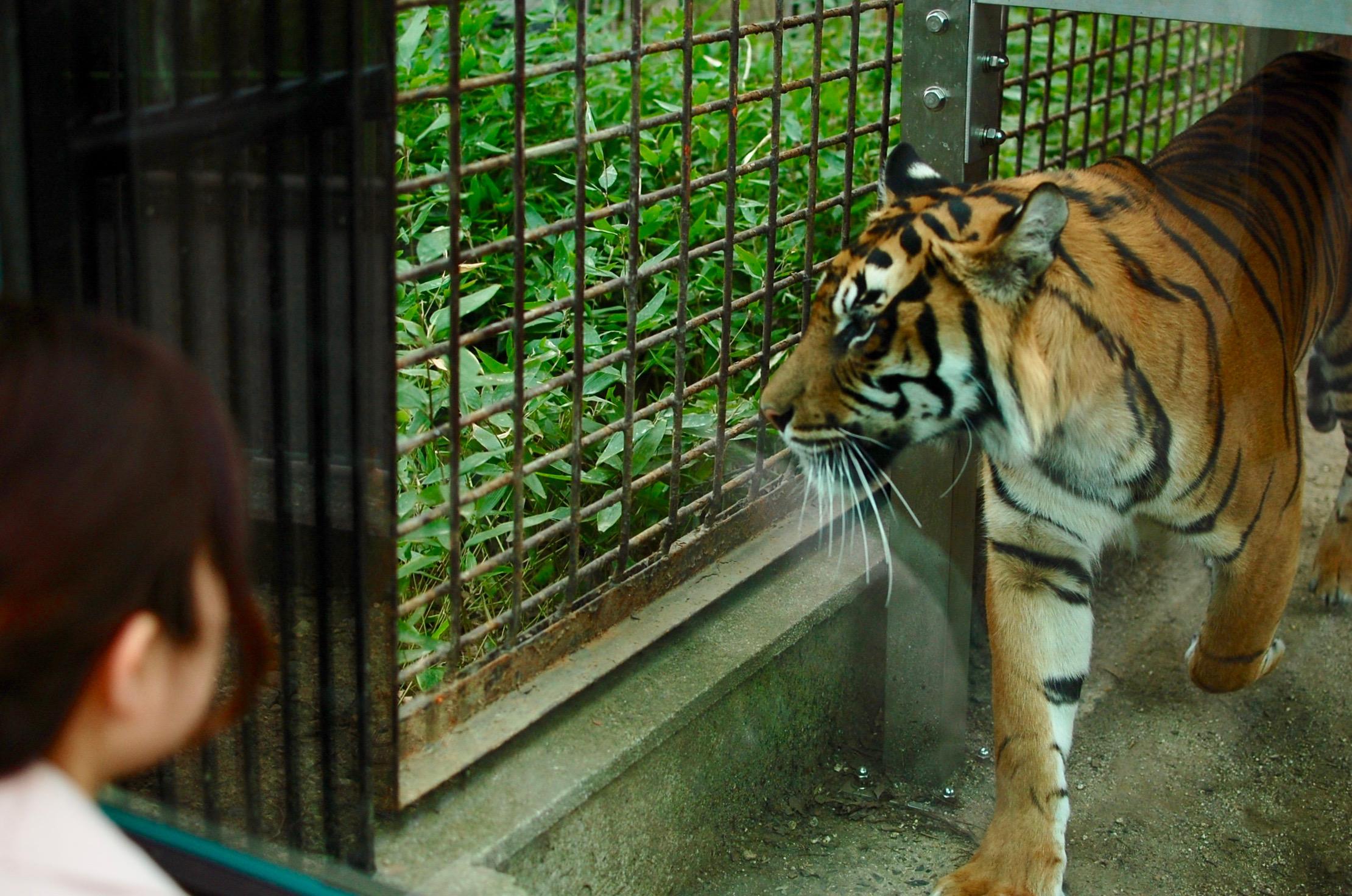 思い出をつなぐ。東山動植物園・80周年記念イベントの見どころを徹底解剖! - DSC 0246