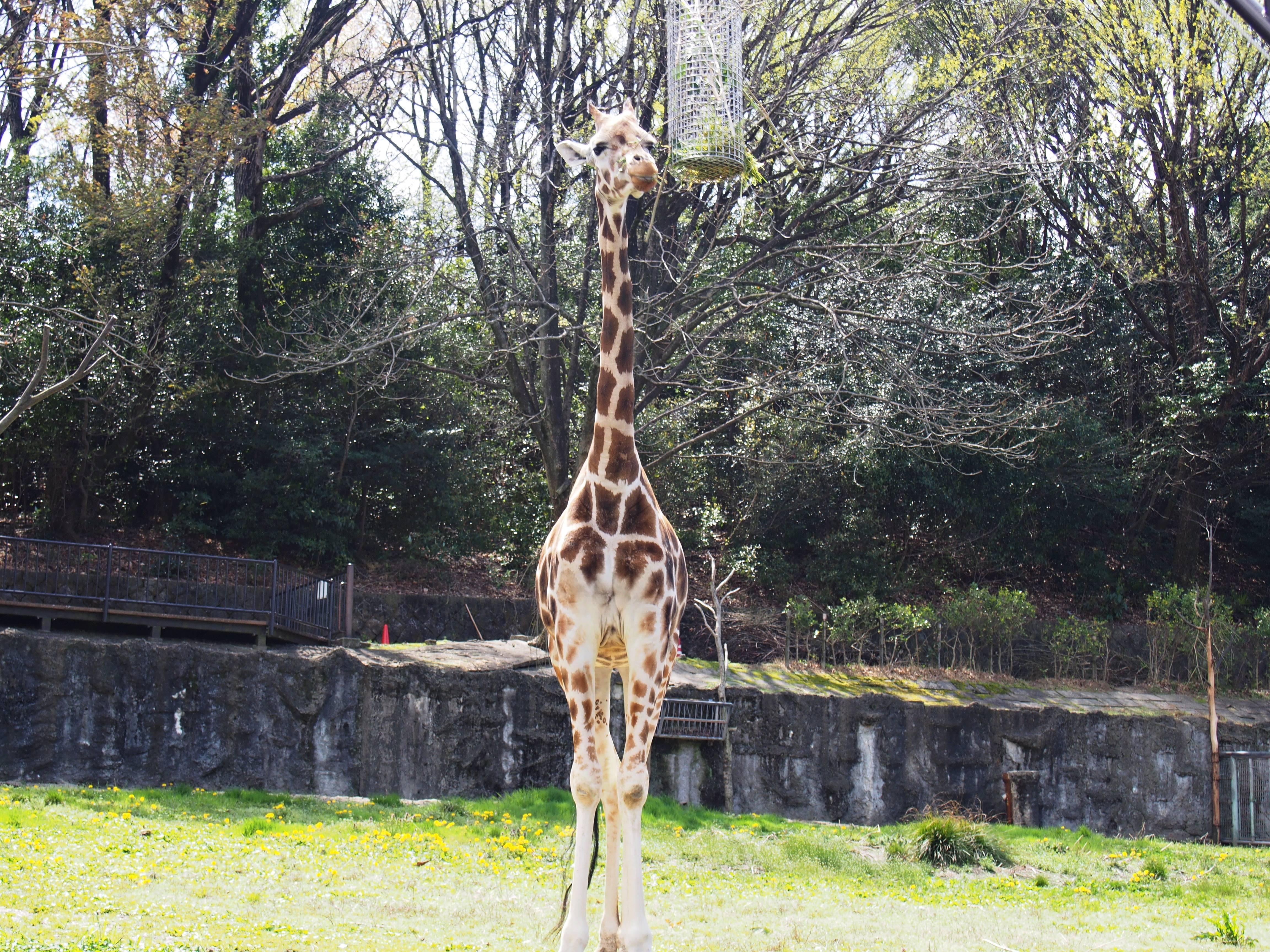 東山動物園の園長に聞いた!動物園をより楽しむためのプランとは - P4121810