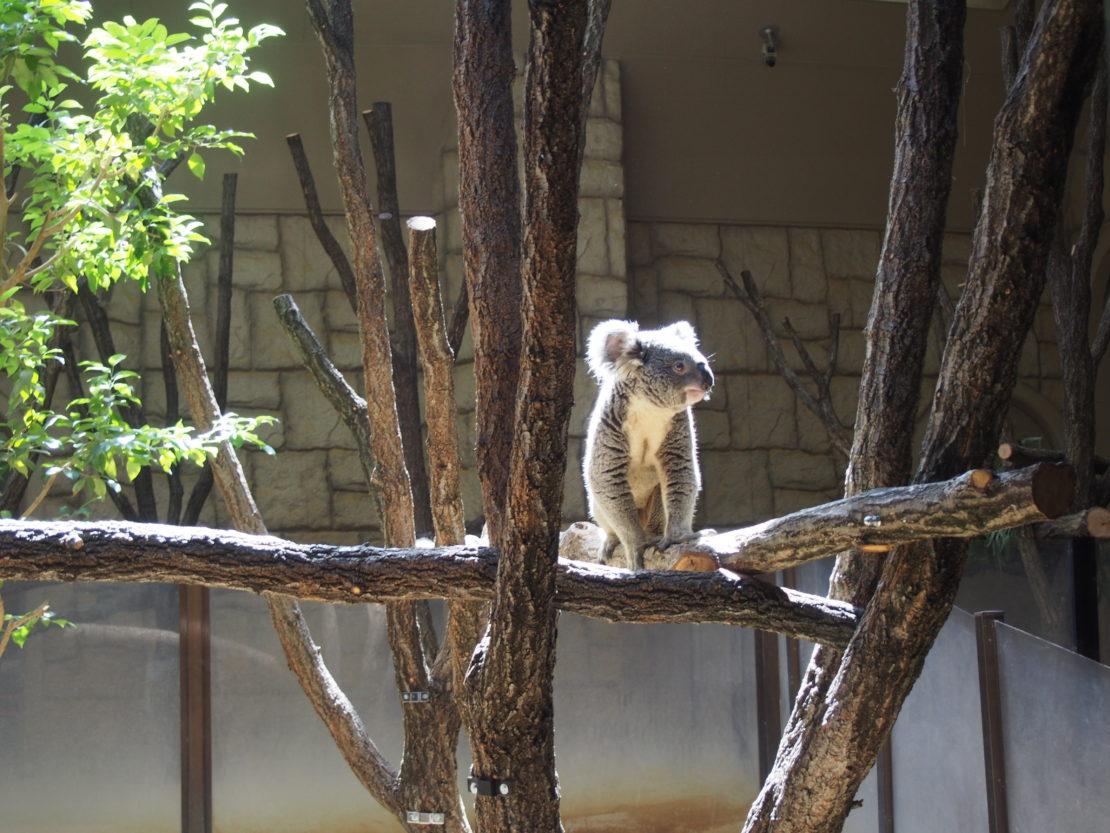 東山動物園の園長に聞いた!動物園をより楽しむためのプランとは