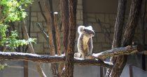 東山動物園の園長に聞いた!動物園をより楽しむためのプランとは - P4121836 210x110