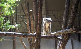 東山動物園の園長に聞いた!動物園をより楽しむためのプランとは - P4121836 260x160