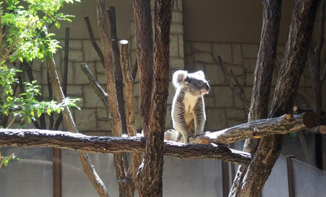 東山動物園の園長に聞いた!動物園をより楽しむためのプランとは - P4121836 660x400