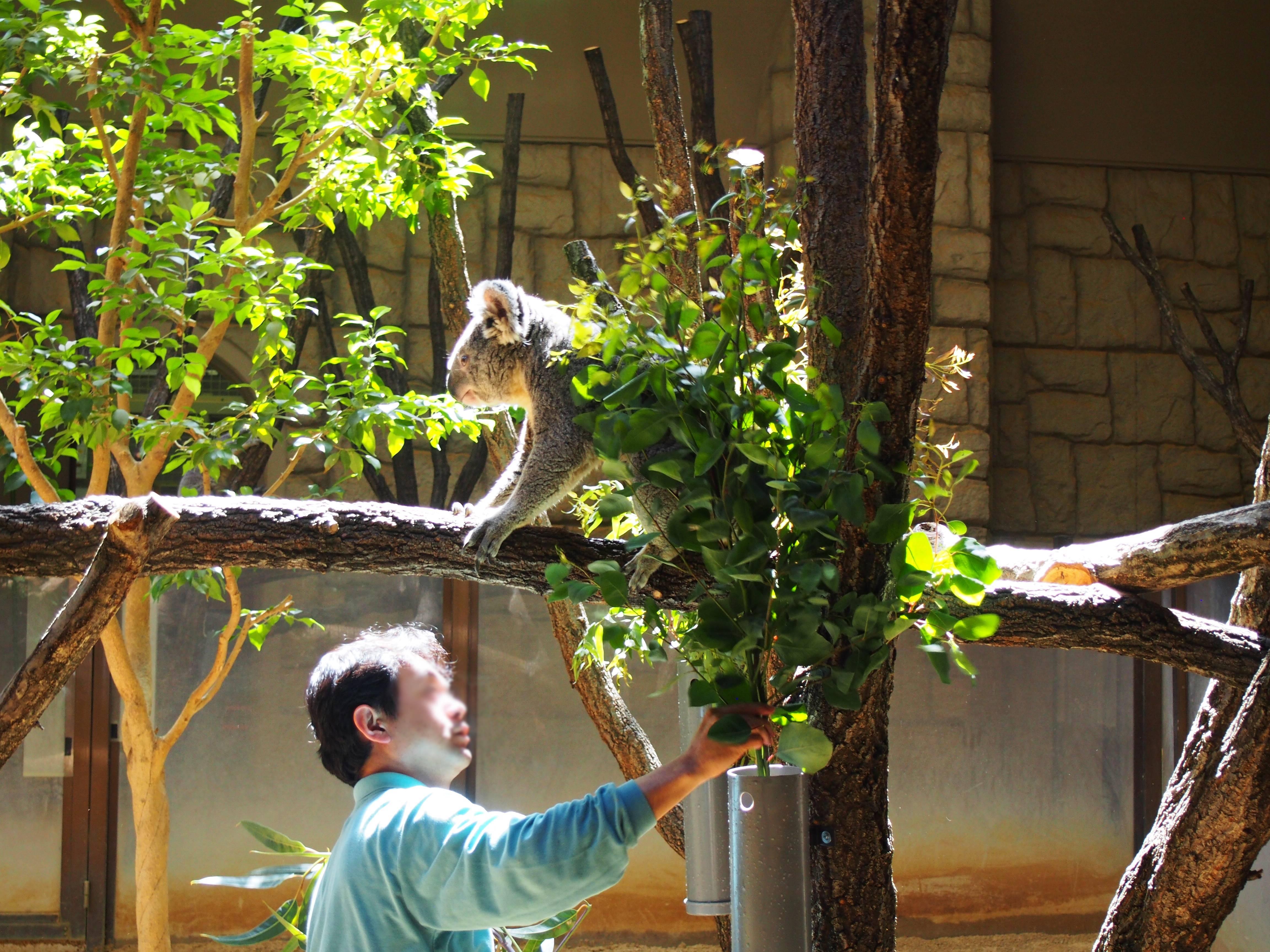 東山動物園の園長に聞いた!動物園をより楽しむためのプランとは - P4121838