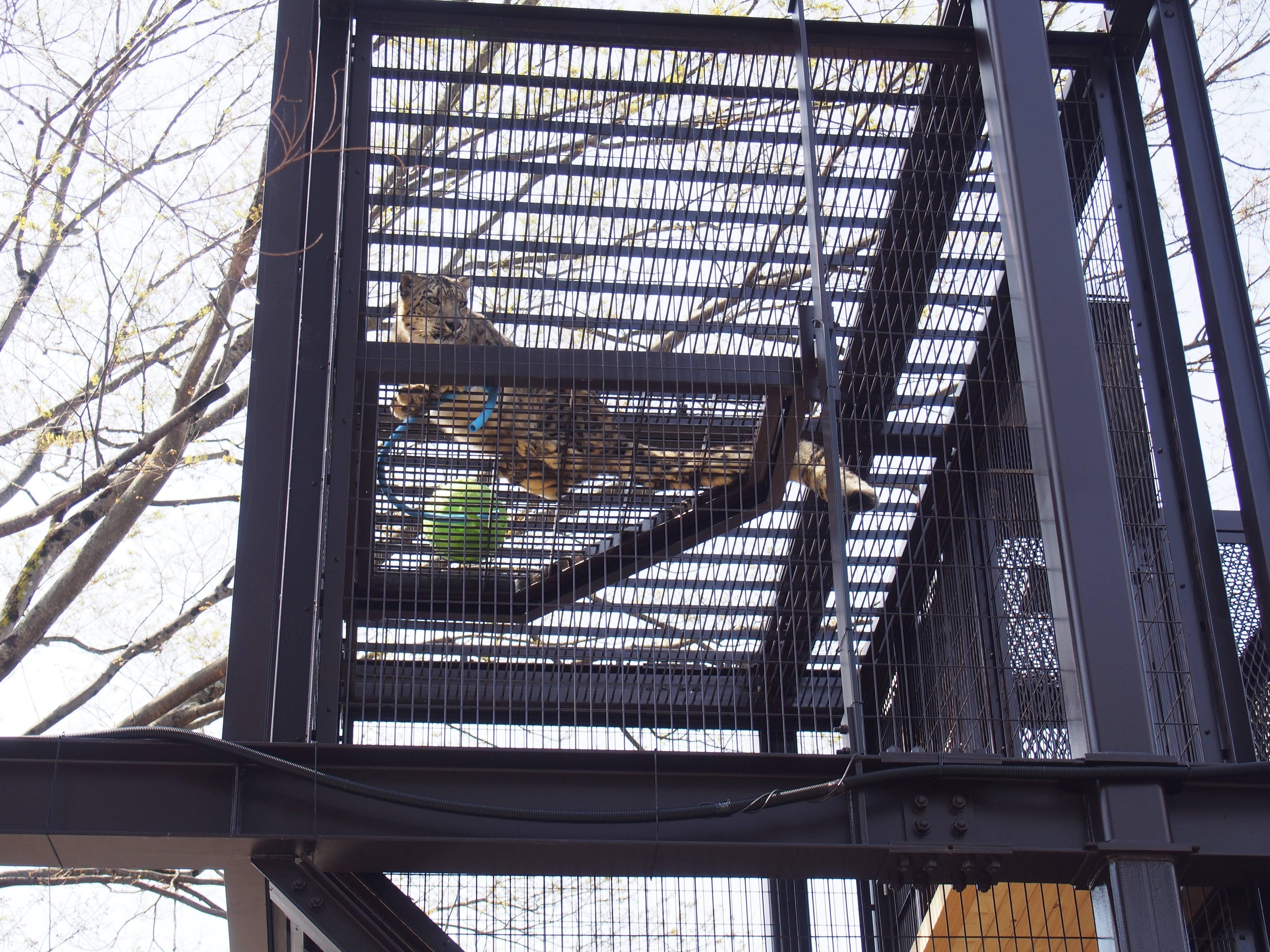 思い出をつなぐ。東山動植物園・80周年記念イベントの見どころを徹底解剖! - P4121872