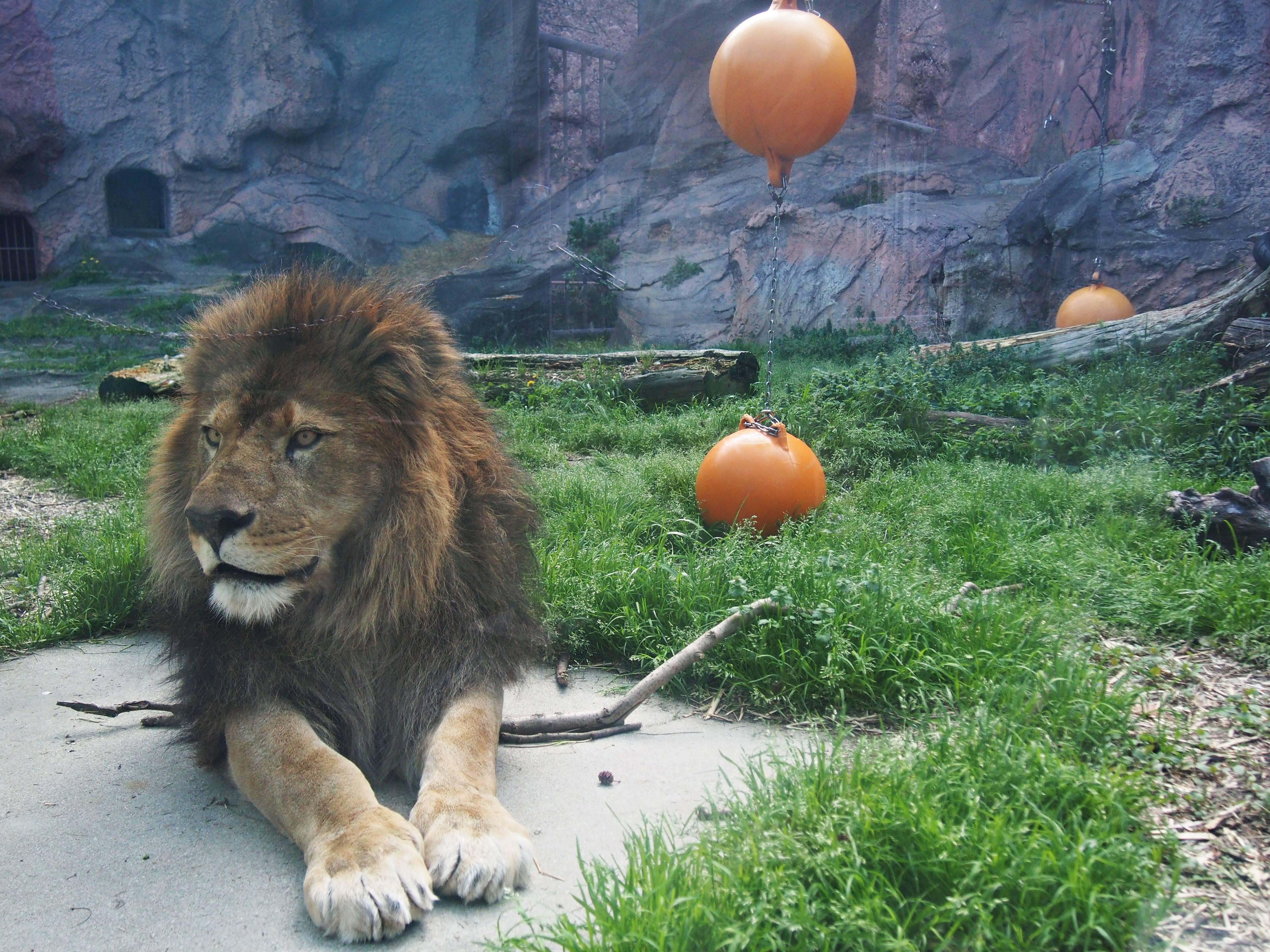 東山動物園の園長に聞いた!動物園をより楽しむためのプランとは - P4121925