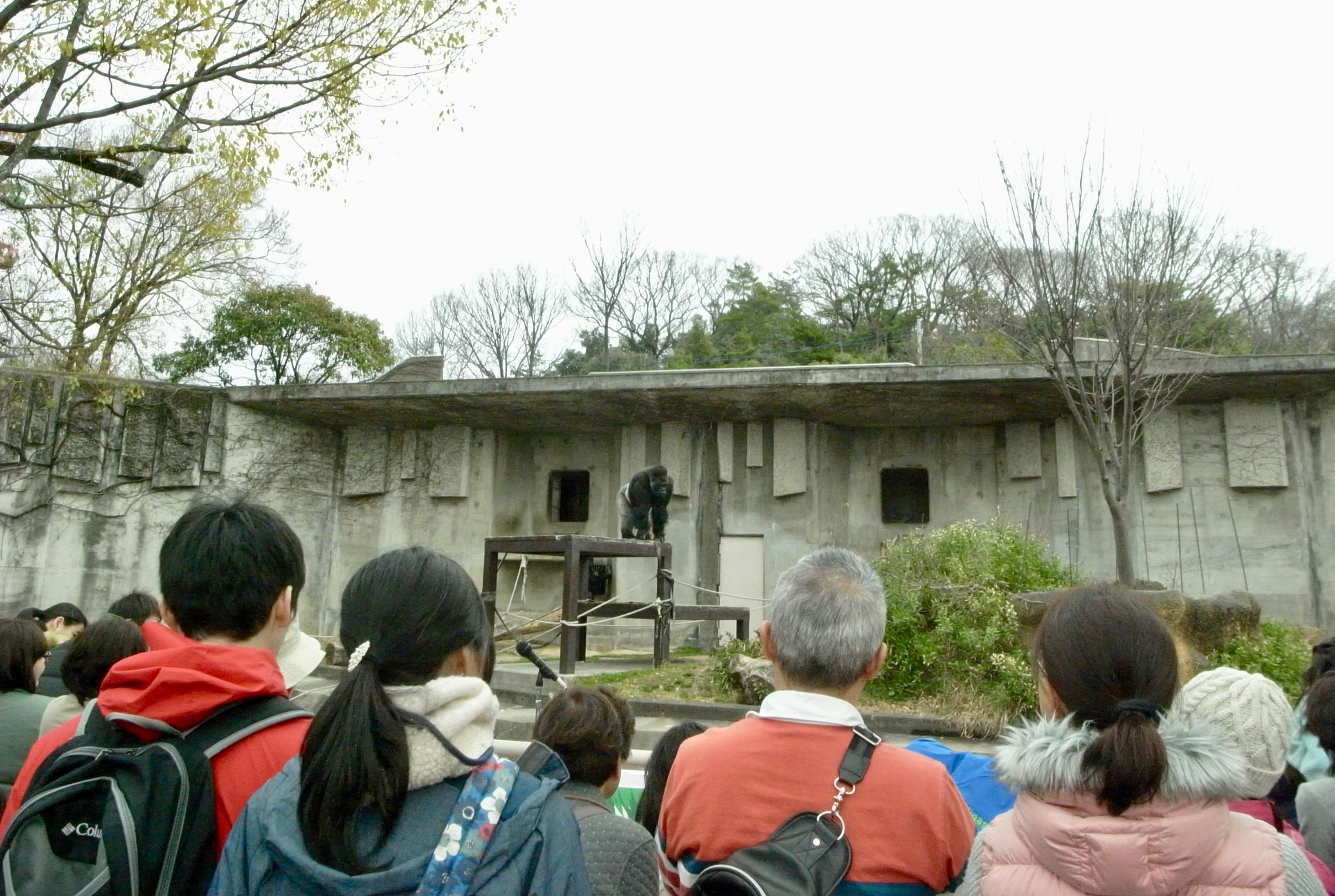 東山動物園の園長に聞いた!動物園をより楽しむためのプランとは - R0015923