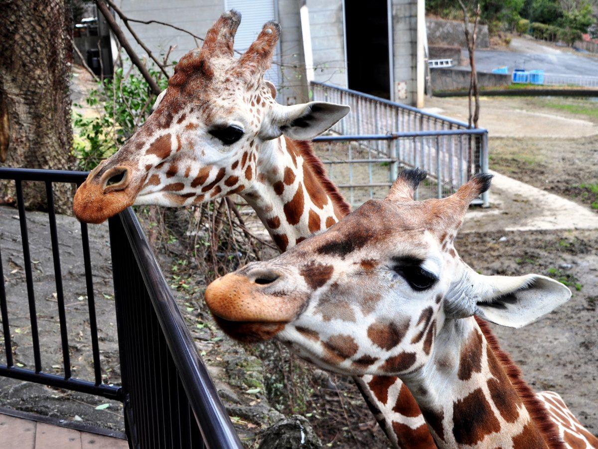 思い出をつなぐ。東山動植物園・80周年記念イベントの見どころを徹底解剖! - event giraffe2 1200x900