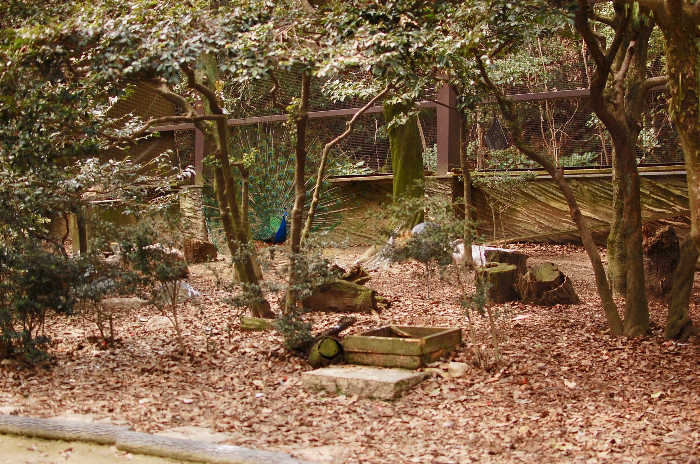 東山動物園の園長に聞いた!動物園をより楽しむためのプランとは - f8ad822fd242412c204f8642a603ce47