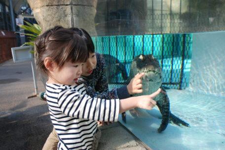鯉のぼりならぬワニのぼり?熱川バナナワニ園でこどもの日に向けたイベントを開催
