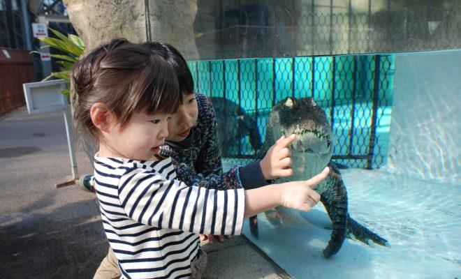 鯉のぼりならぬワニのぼり?熱川バナナワニ園でこどもの日に向けたイベントを開催 - img 124530 2 660x400