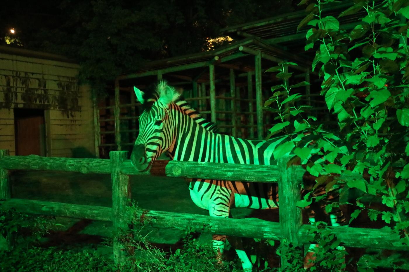 どうぶつ達の本当の姿が見れるかも!?「東山動植物園ナイトZOO&GARDEN」 - Unknown