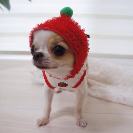 日本最大級の犬のマルシェイベント『わんだらけ』開催!当日は里親募集も実施 - 21105725 1957930224490270 6630940356519394450 n