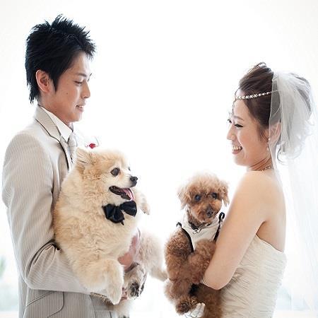 日本最大級の犬のマルシェイベント『わんだらけ』開催!当日は里親募集も実施 - 21314706 1962027980747161 4287489560572358211 n