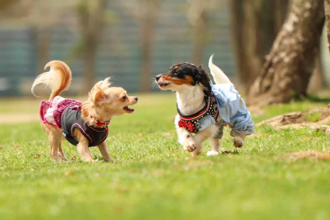 日本最大級の犬のマルシェイベント『わんだらけ』開催!当日は里親募集も実施