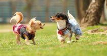 日本最大級の犬のマルシェイベント『わんだらけ』開催!当日は里親募集も実施 - 5e31d76129238ced11bdc83d8ad87488 m 210x110