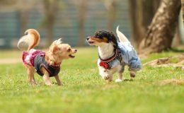 日本最大級の犬のマルシェイベント『わんだらけ』開催!当日は里親募集も実施 - 5e31d76129238ced11bdc83d8ad87488 m 260x160