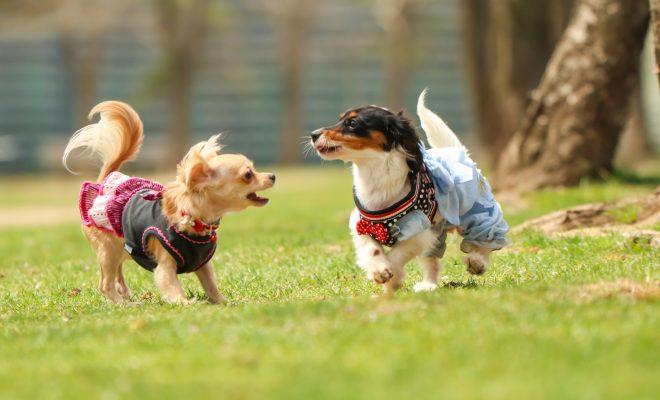 日本最大級の犬のマルシェイベント『わんだらけ』開催!当日は里親募集も実施 - 5e31d76129238ced11bdc83d8ad87488 m 660x400