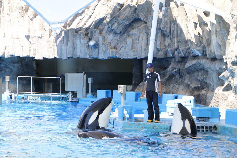 デート、家族で楽しめる『名古屋港水族館』!アクセス・料金・ランチ情報を紹介 - MG 8437 930x620