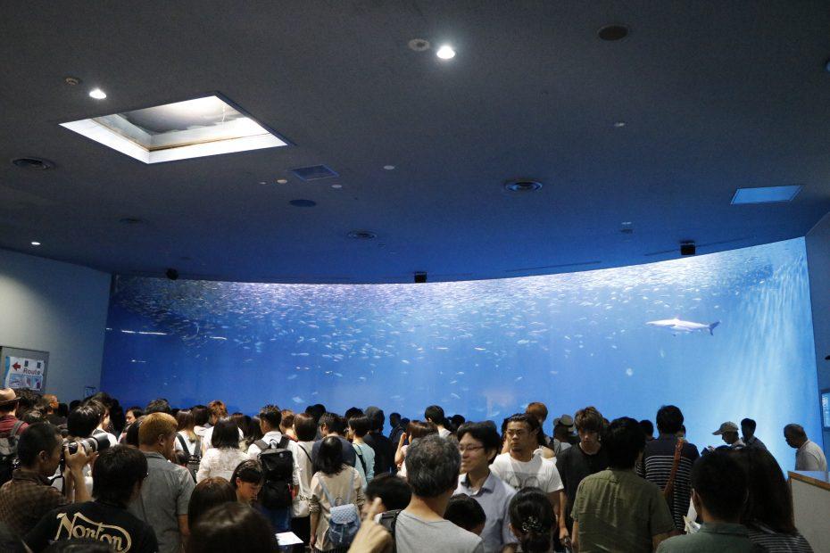 デート、家族で楽しめる『名古屋港水族館』!アクセス・料金・ランチ情報を紹介 - MG 8447 930x620