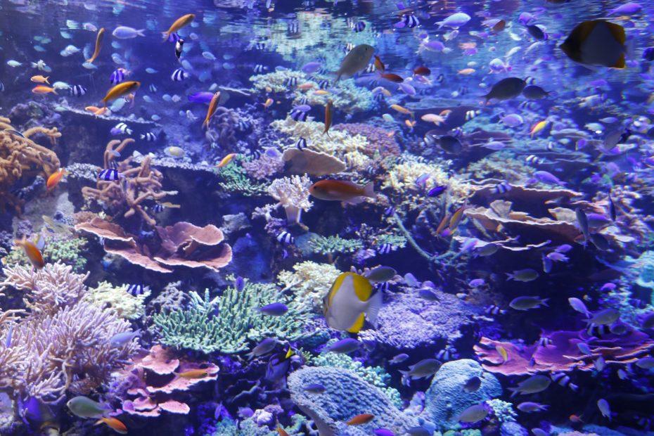 デート、家族で楽しめる『名古屋港水族館』!アクセス・料金・ランチ情報を紹介 - MG 8488 1 930x620