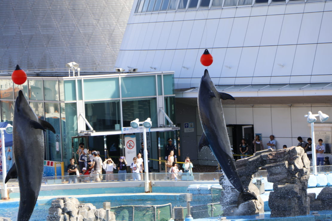 デート、家族で楽しめる『名古屋港水族館』!アクセス・料金・ランチ情報を紹介