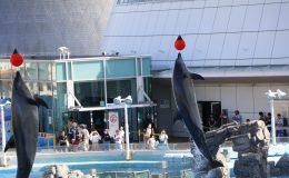 デート、家族で楽しめる『名古屋港水族館』!アクセス・料金・ランチ情報を紹介_0