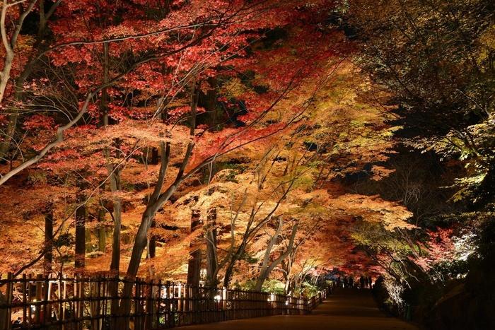 【2017年】名古屋からもアクセスしやすい!愛知県内の紅葉狩り穴場スポット5選 - 2a9e7ceaa2d88532fc55e4102a3c8a2e