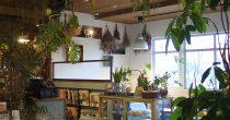 ボタニカルなカフェで心地の良いひと時を。岡崎で大人気の『ブルーブルーカフェ』 - DSC 0912 210x110