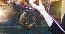 自分で釣った魚が食べられる!『釣船茶屋 ざうお小牧店』で釣り体験をしてきた - DSC 1121 210x110