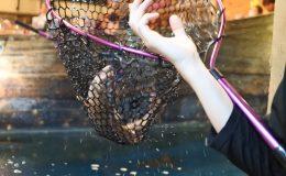 自分で釣った魚が食べられる!『釣船茶屋 ざうお小牧店』で釣り体験をしてきた - DSC 1121 260x160