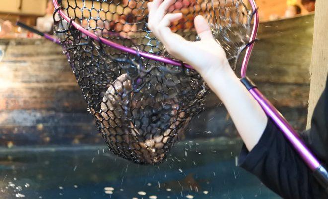 自分で釣った魚が食べられる!『釣船茶屋 ざうお小牧店』で釣り体験をしてきた - DSC 1121 660x400