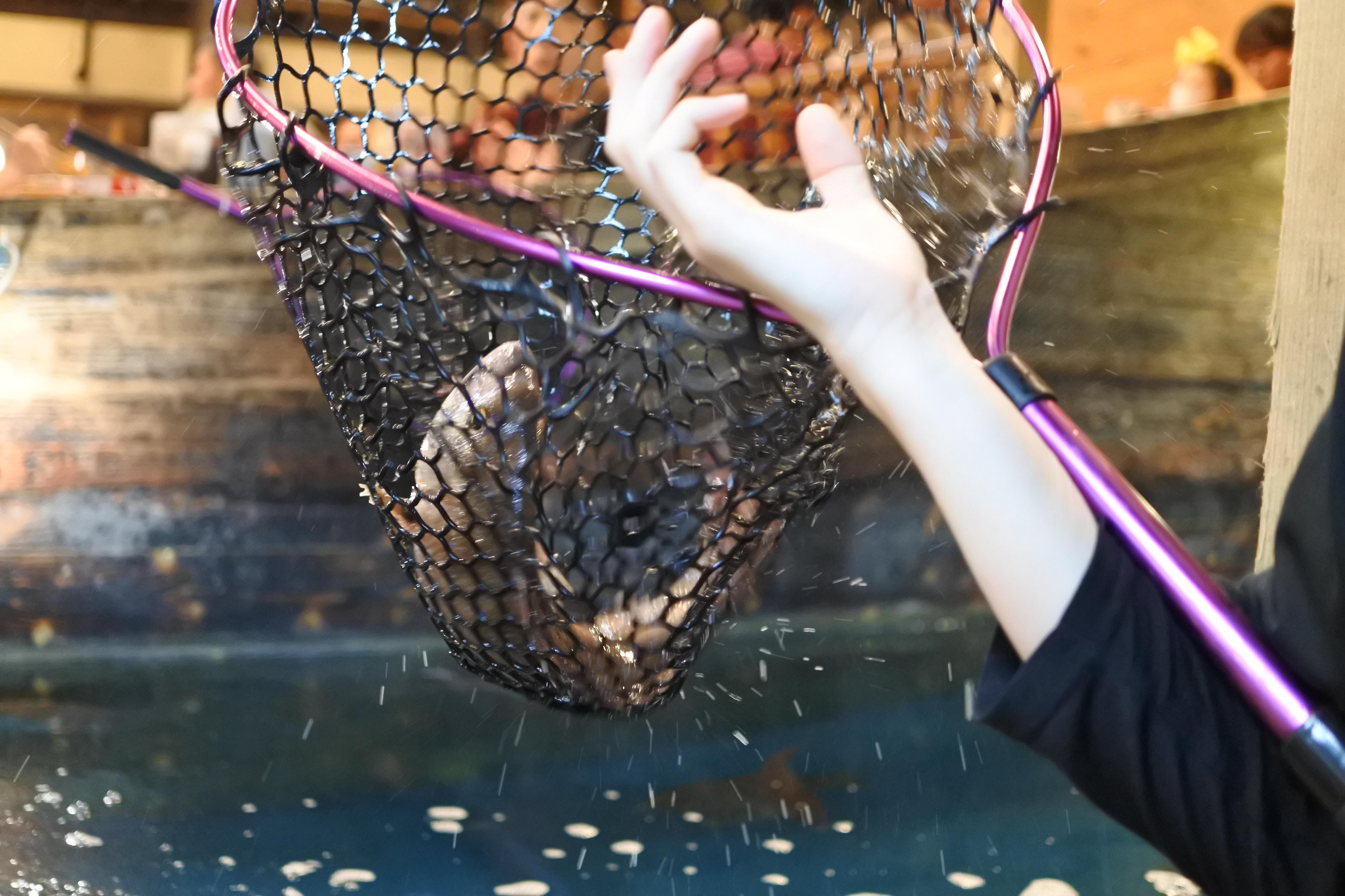 自分で釣った魚が食べられる!『釣船茶屋 ざうお小牧店』で釣り体験をしてきた - DSC 1121