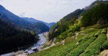 今年もお茶の季節が到来!お茶の価値観が変わる体験、岐阜県東白川村に行ってきた - DSC 0838 210x110