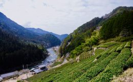 今年もお茶の季節が到来!お茶の価値観が変わる体験、岐阜県東白川村に行ってきた - DSC 0838 260x160