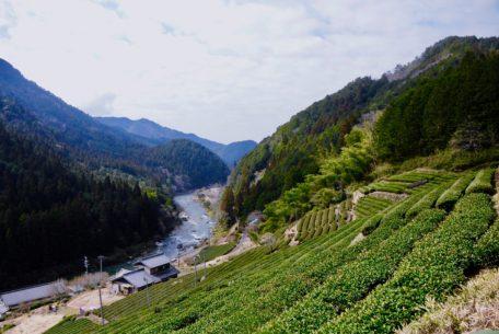 今年もお茶の季節が到来!お茶の価値観が変わる体験、岐阜県東白川村に行ってきた