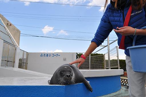 体験型水族館!「南知多ビーチランド」で夏限定の海の生き物とふれあい体験をしよう - 323333