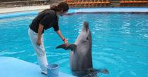 体験型水族館!「南知多ビーチランド」で夏限定の海の生き物とふれあい体験をしよう - 334 210x110