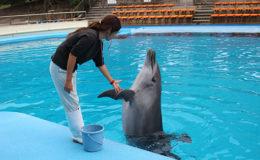 体験型水族館!「南知多ビーチランド」で夏限定の海の生き物とふれあい体験をしよう - 334 260x160