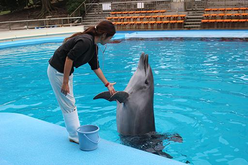 体験型水族館!「南知多ビーチランド」で夏限定の海の生き物とふれあい体験をしよう