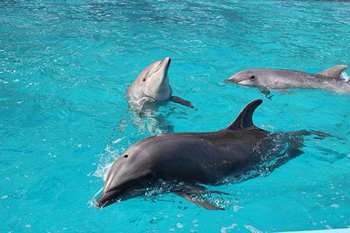 体験型水族館!「南知多ビーチランド」で夏限定の海の生き物とふれあい体験をしよう - image 1
