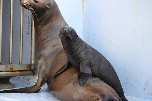 体験型水族館!「南知多ビーチランド」で夏限定の海の生き物とふれあい体験をしよう - image33